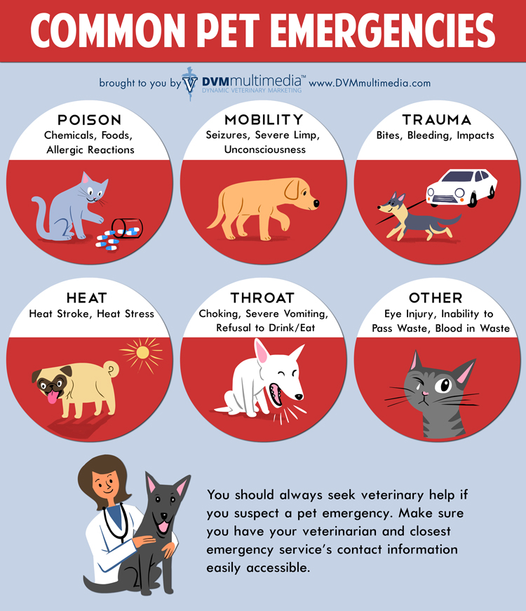 Common Pet Emergencies